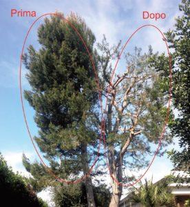 Potatura ed abbattimento alberi di Alto Fusto